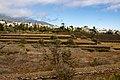 At Tenerife 2020 469.jpg