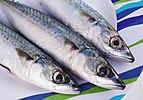 Atlantic mackerel (Scomber scombrus).jpg