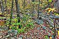 Autumn-foliage-forest-creeks - Virginia - ForestWander.jpg
