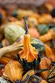 AutumnSquash.jpg