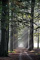 Autumn ^^^ Lovely sunbeams trough the beechlane at Hoge Erf Schaarsbergen - panoramio.jpg