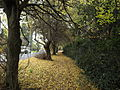 Autumn Leaves in Olinda, Victoria, Australia (1).JPG