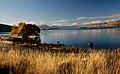 Autumn at Lake Tekapo NZ (8670143763).jpg