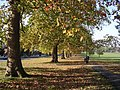 Autumn on Streatham Common - geograph.org.uk - 736026.jpg