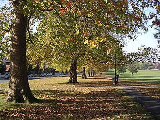Streatham -  Streatham Common. Avenue of autumn trees looking down Streatham Common towards Streatham High Road