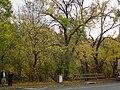 Autumn trees in Warrandyte.jpg