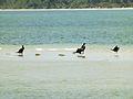 Aves- ilha do mel.jpg