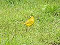 Aves de Calderas, Edo Barinas 2.JPG