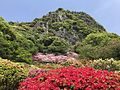 Azalea Valley in Mifuneyama Garden and Mount Mifuneyama 4.jpg