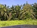 Bagan, 83000, Johor, Malaysia - panoramio (7).jpg