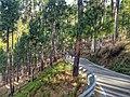 Bageshwar-Kanda road 01.jpg