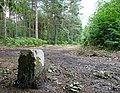 Balade en forêt d'Évreux 010.jpg