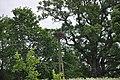 Baltā stārķa ligzda Nr.2026, Suntažu pagasts, Ogres novads, Latvia - panoramio.jpg