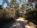 Bambara road - panoramio.jpg