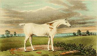 James Barenger - Claret, a hunter (1822)
