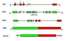 Humanized antibody - WikiVisually