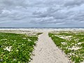 Beach access in Kingscliff, New South Wales 02.jpg
