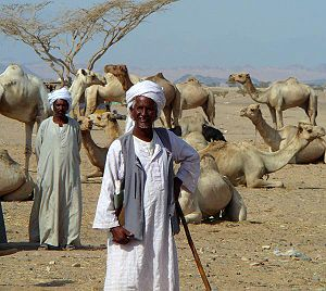 Demographics of Sudan - Beja nomads