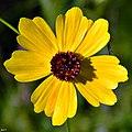 Bee Beware (7700118212).jpg
