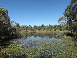 Billabong - A billabong along Scrubby Creek at Berrinba Wetlands in Berrinba, Logan City, 2014