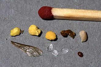 Beeswax - Fresh wax scales (in the middle of the lower row)