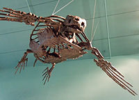 Big fossil turtle.jpg