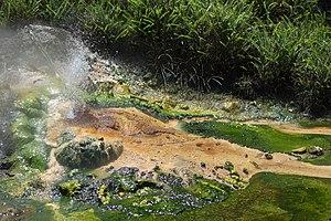 Waimangu Volcanic Rift Valley - Bird's Nest Spring