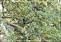 Bird jeddah Feb18 1.jpg