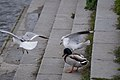 Birds in terrass.jpg