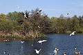 Birds on Hooks Marsh Lake at Fishers Green, Lee Valley, Waltham Abbey, Essex, England 03.jpg