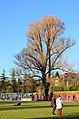Blatterwiese - Chinagarten - Seefeldquai 2014-02-24 16-38-29.JPG