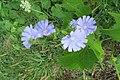 Blue Flax 19-07-19 040.jpg
