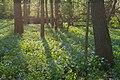 Bluebell Floodplain II (13169965145).jpg