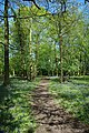 Bluebell Path in Hatters Wood - geograph.org.uk - 1845679.jpg