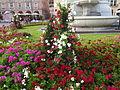 Bolzano flowers 2014 II.JPG