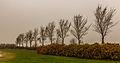 Bomengroep om strandje put van Nederhorst 02.jpg