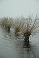 Borgfelder Wümmewiesen Weiden.jpg