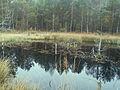 Borkovická blata - rašeliniště 2.jpg