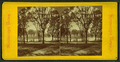 Boston Common, from Robert N. Dennis collection of stereoscopic views 10.png