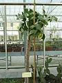 BotanicGardensPisa (122).JPG
