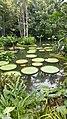 Botanical Garden Singapore (38445601924).jpg
