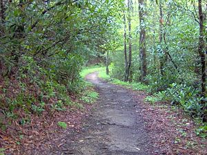 Bote Mountain - Image: Bote mountain trail gsmnp