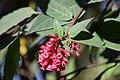 Bouquet 5 (138872035).jpeg