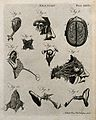 Brain and sensory organs; ten figures showing dissections of Wellcome V0008034ER.jpg