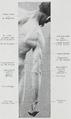 Braus 1921 171.png