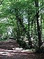 Bridleway, Sandpit Wood - geograph.org.uk - 1509285.jpg