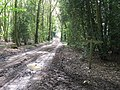 Bridleway crossing track on Access land called Low Heath - geograph.org.uk - 1260095.jpg