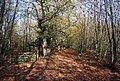 Bridleways join in Hurst Wood - geograph.org.uk - 1570677.jpg