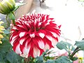 Brightness of Flower.jpg