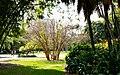 Brisbane City Botanic Gardens.jpg